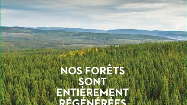 Forêts récoltées