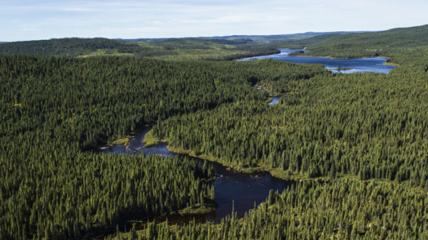 Reputation of Canada's forest products remains best in the world