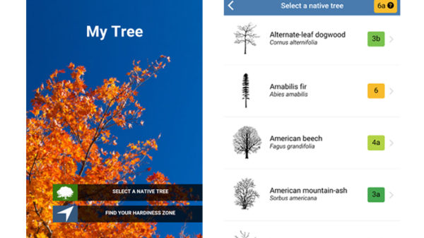 My Tree App