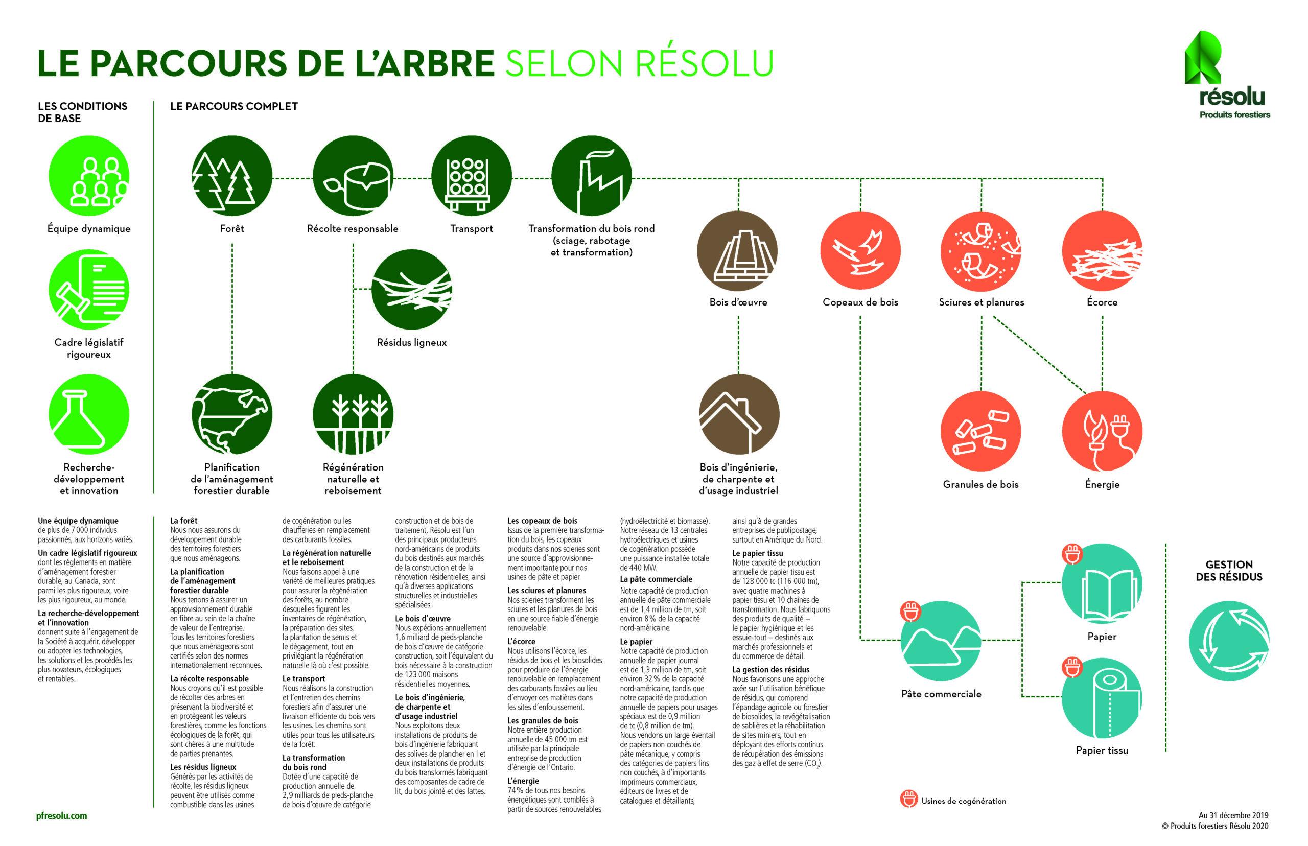 infographique parcours de l'arbre