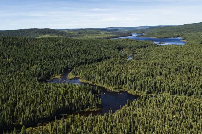 Produits forestiers canadiens : la meilleure réputation du monde