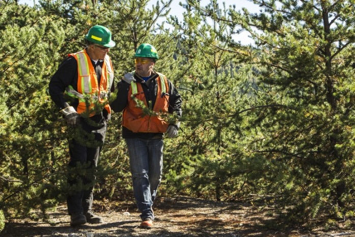 Forestry workers discussing