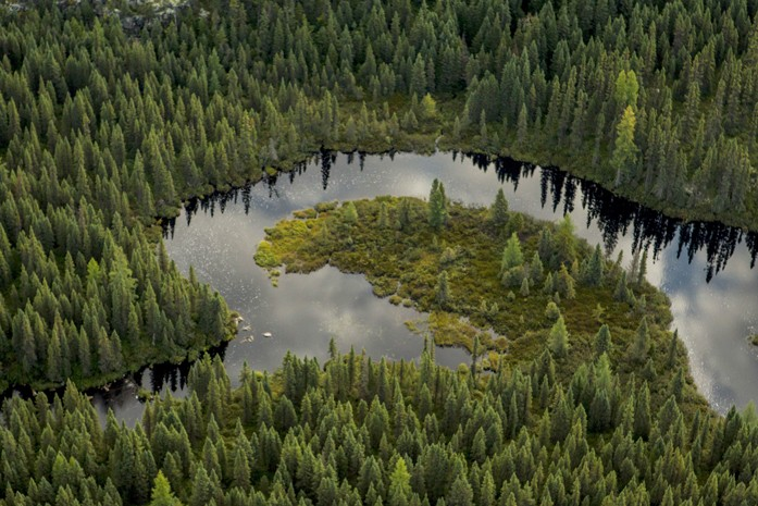 The Greatest Threat to the Boreal is Misinformation
