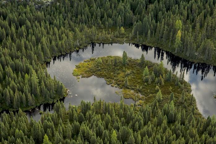 La plus grande menace pour la forêt boréale, c'est la désinformation