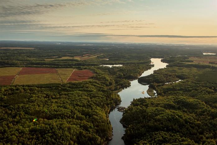 L'état des forêts au Canada